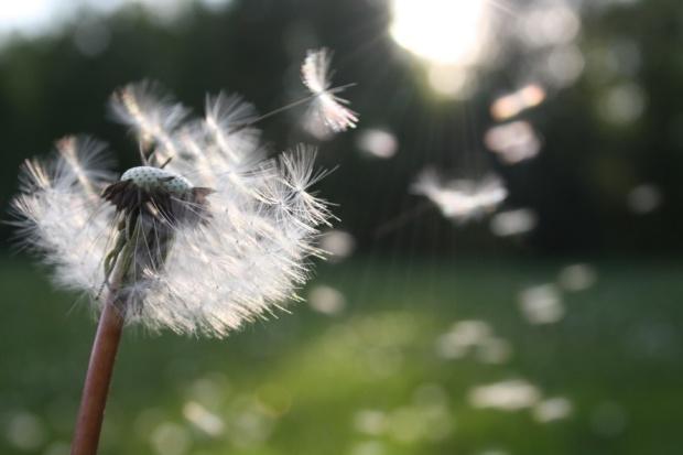 pexelsphoto-flower